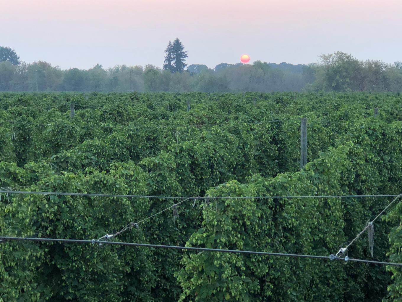 Crosby Hop Farm Harvest 2018 Overhead Sun