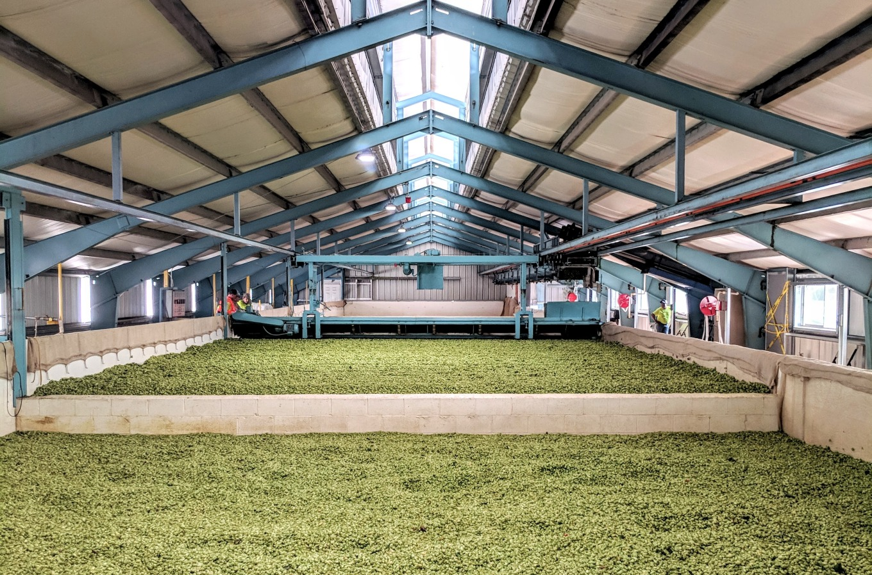Crosby Hop Farm Drying Beds Hops